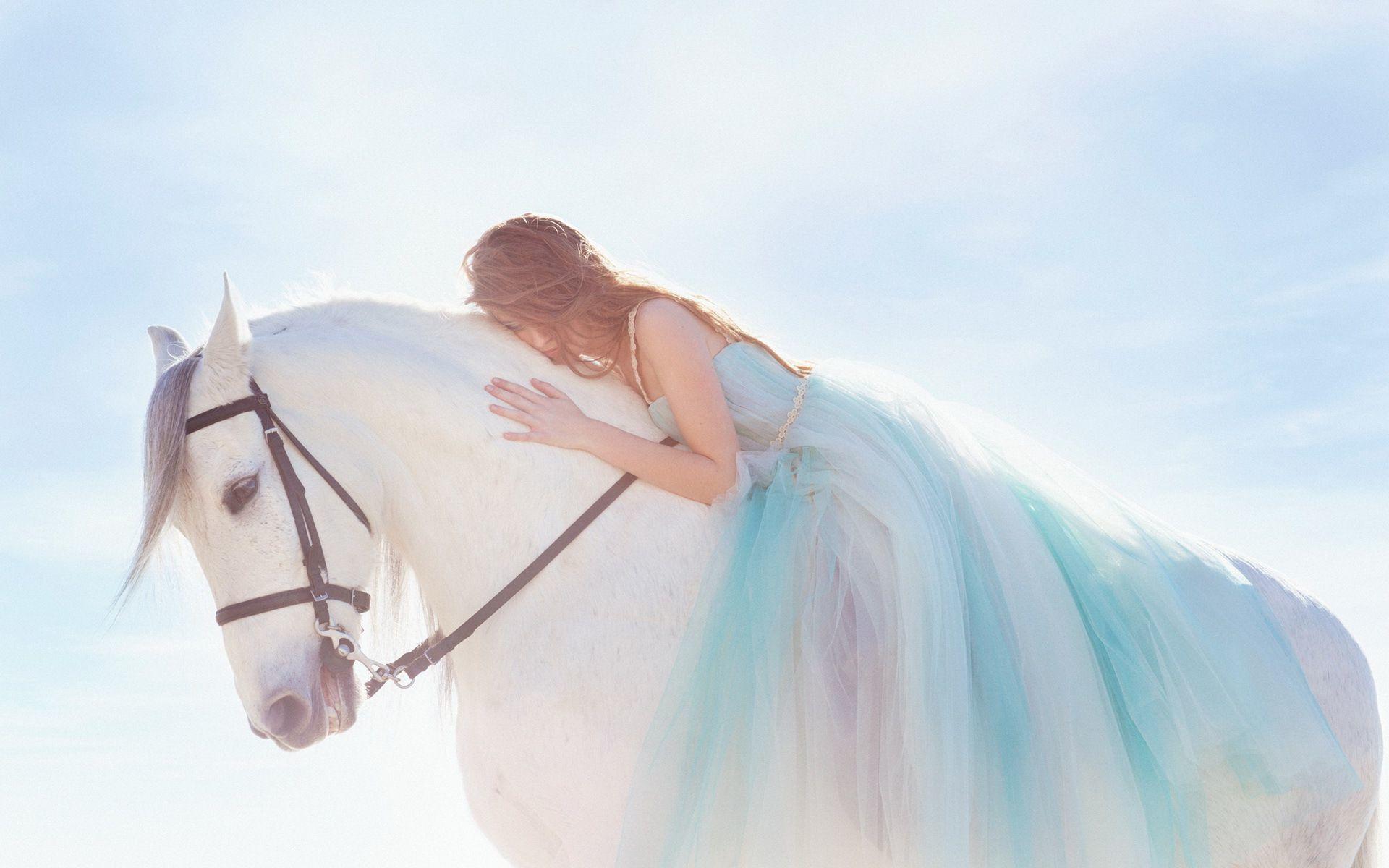 White Horse Wallpapers Full Hd Horse Wallpaper White Horse Photography White Horse