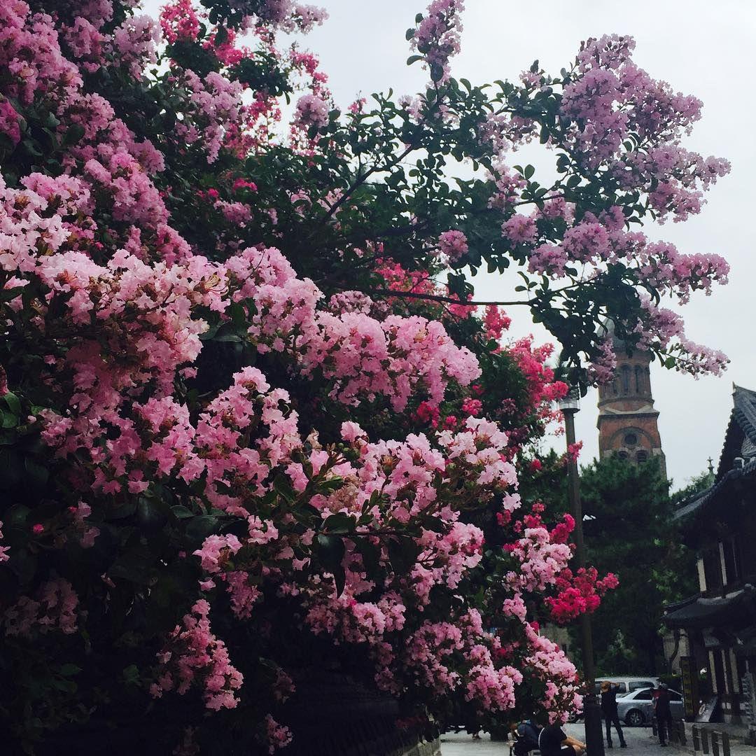 """#instatravel #travel #jeonju #flower #instamood #instalike #travelgram  #전주 #한옥마을 #꽃 #선팔 #맞팔  아가야들 만나러 가는길 ✨"""