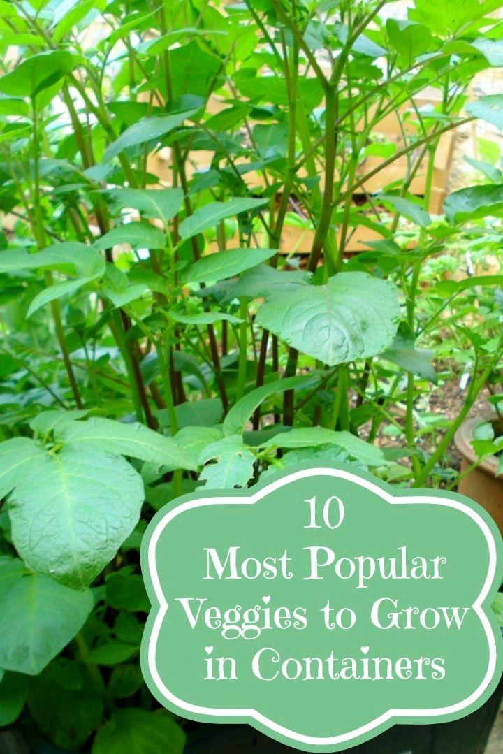 popular garden vegetables