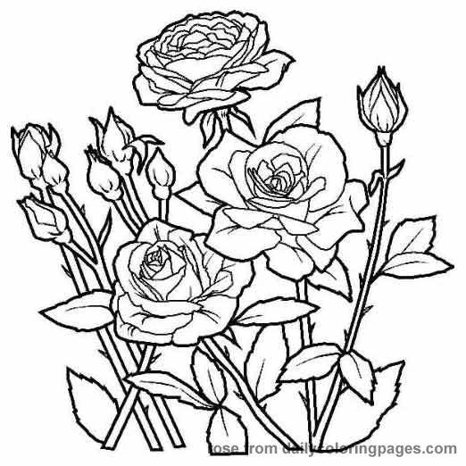 Pin By Jen Hayter On Quilling Rose Coloring Pages, Flower Coloring Pages, Flower  Coloring Sheets
