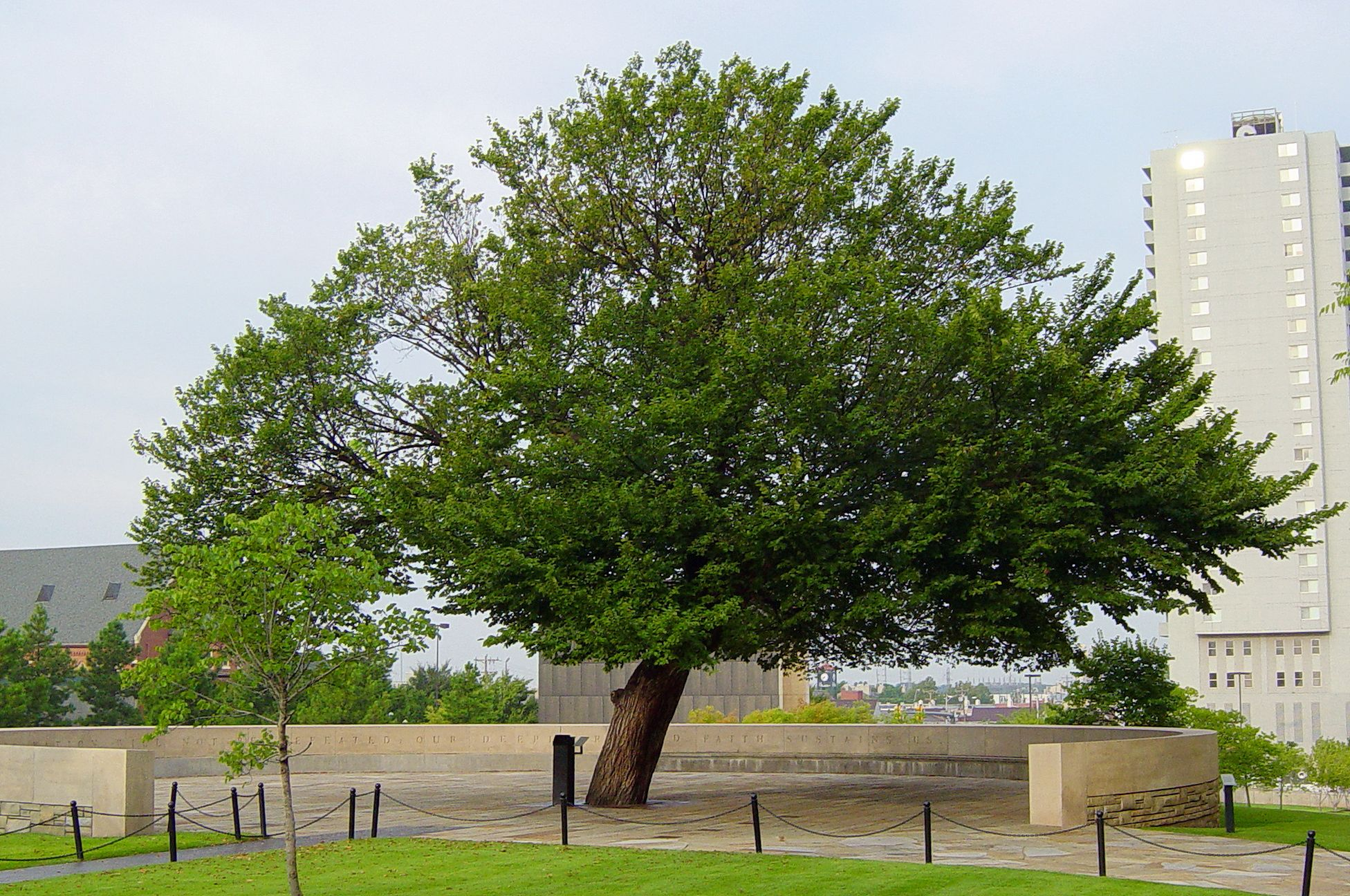 The Survivor Tree Of The Oklahoma City Bombing Http En