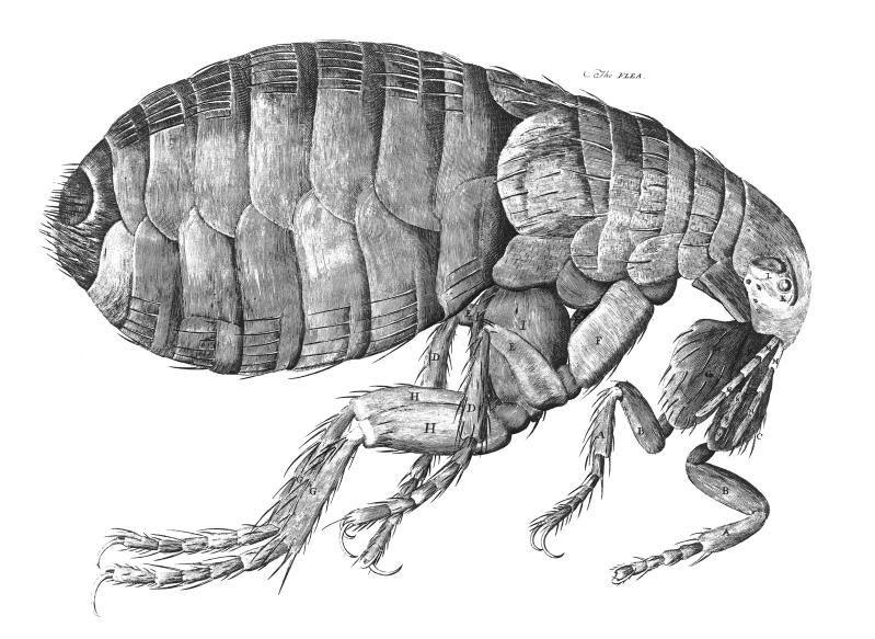 How Effective Is Diatomaceous Earth For Fleas Cuteness Fleas Robert Hooke British Art