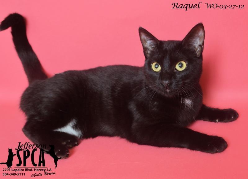 Adopt Raquel on Adoption, Pets, Animal shelter
