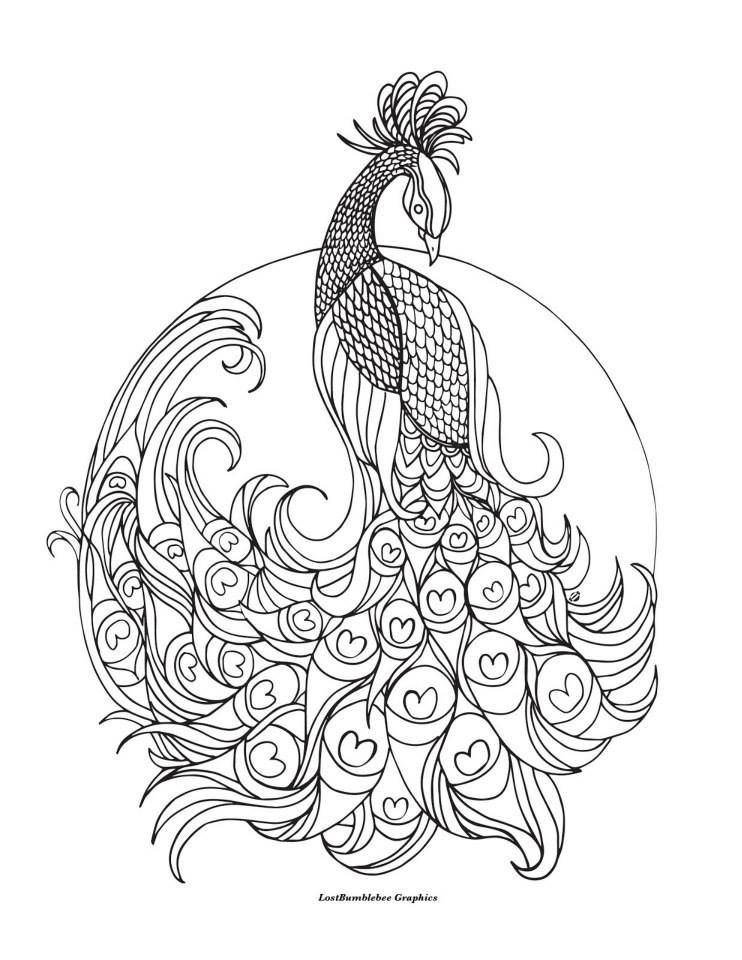 detailed coloring pages to print - peacock coloring pages colouring adult detailed advanced