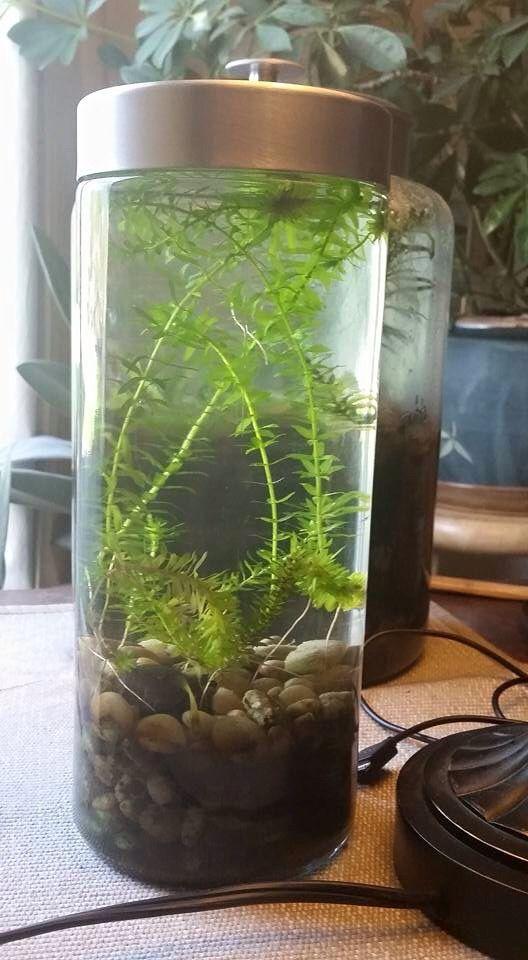 Tabletop Ecosystem