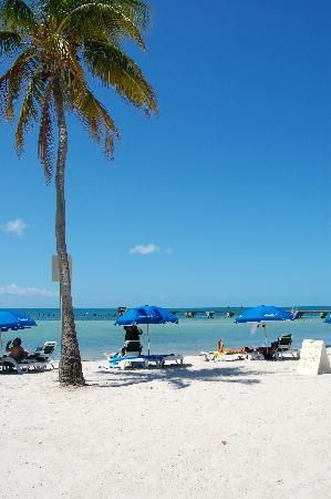 Higgs Beach Palm Tree For Shade Key West Beaches Florida