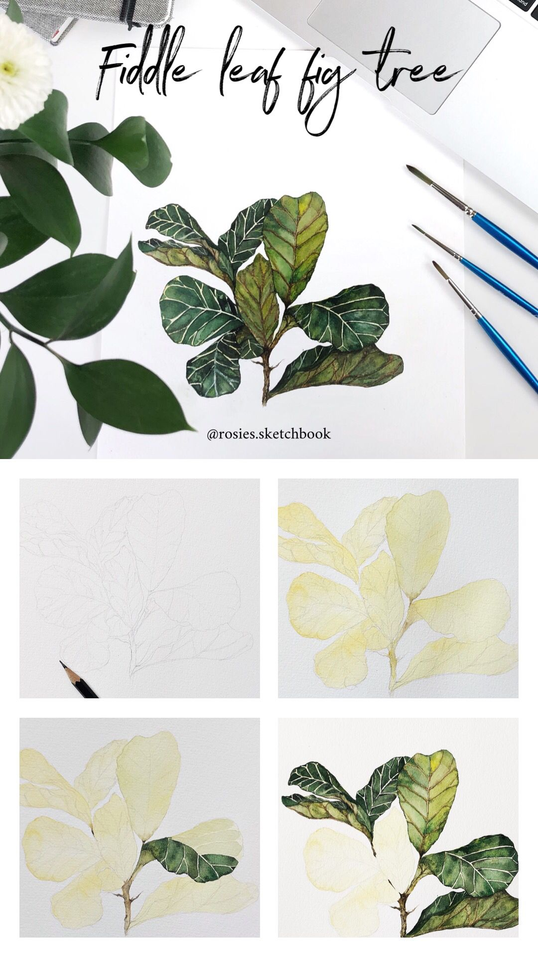 A Quick Fiddle Leaf Fig Tree Tutorial Using Watercolours With Step