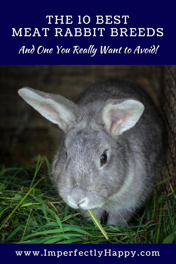 The 10 Best Meat Rabbit Breeds for Backyard Homesteaders ...