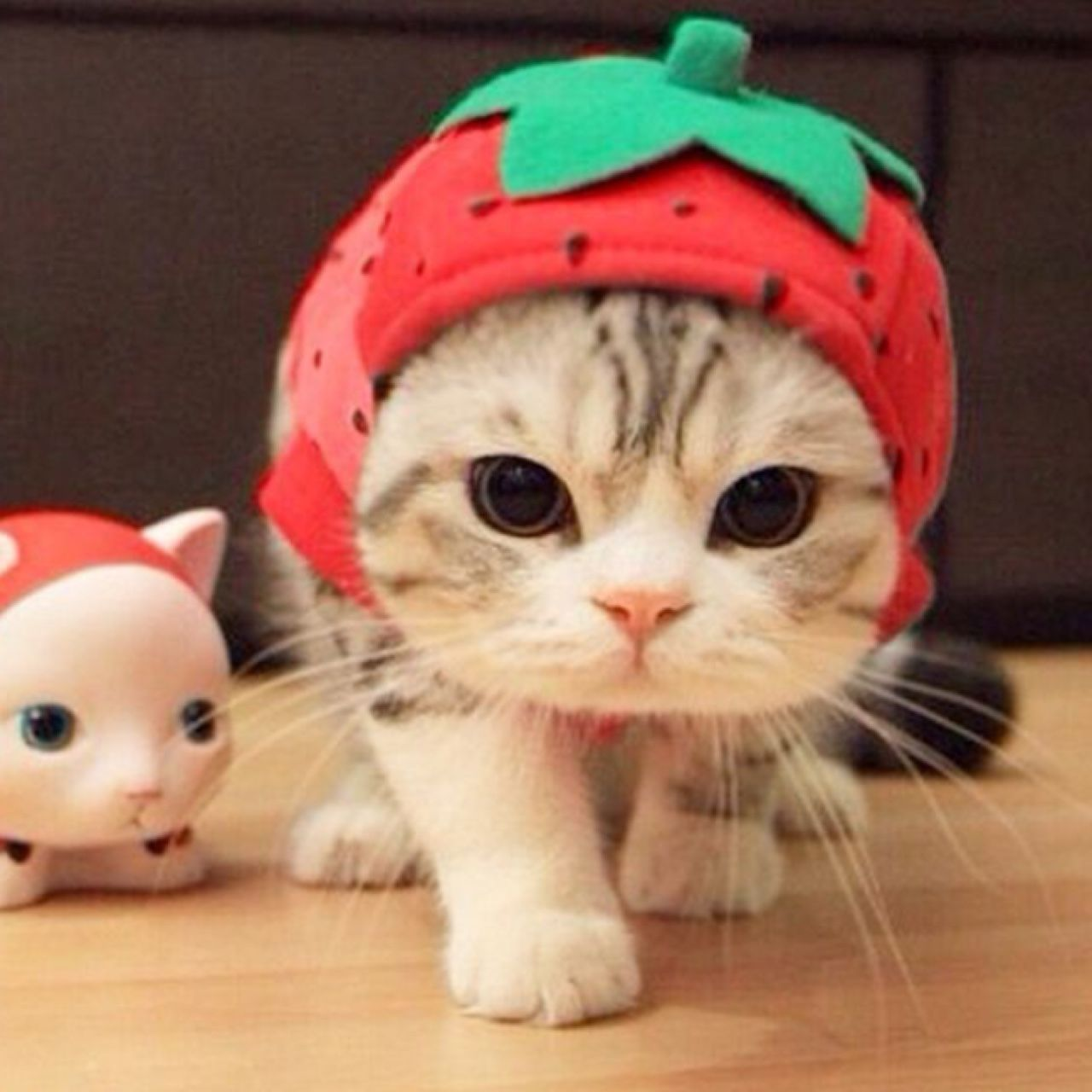 Strawberry hat cute Halloween costume for cats or dogs