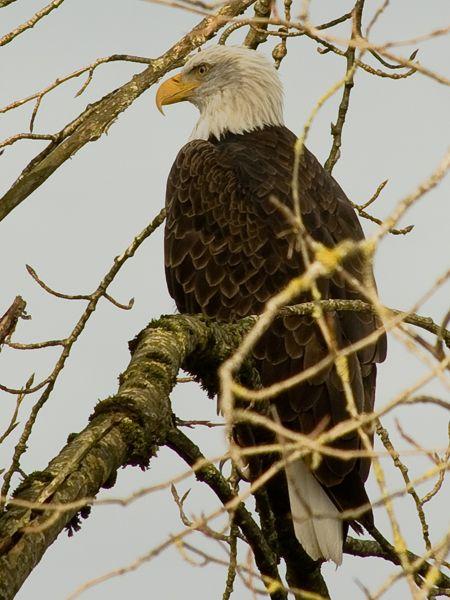 Eagle...Magnificent!!!
