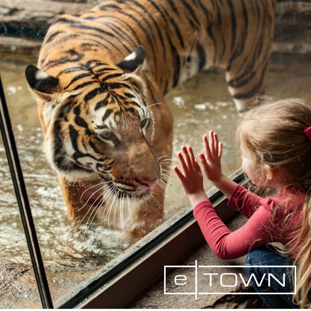 eTown is only 15 miles from the jacksonvillezoo!🐾🐯 To