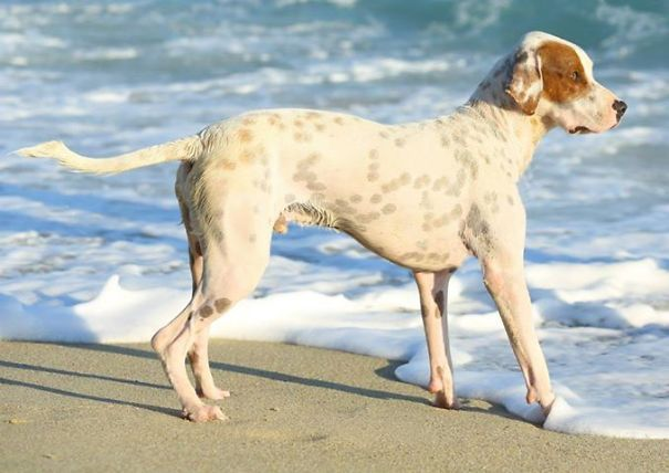 341 Crossbreed Dogs That Will Make You Fall In Love With Mutts