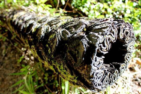 Stem of a tree fern in Abel Tasman National Park - by blackdotswhitespots