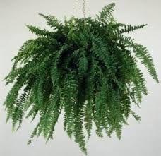 resultado de imagen para plantas de interior - Plantas Colgantes De Interior