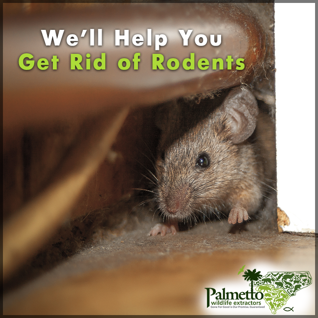 If You Have Seen Mice Or Droppings In Your Home Need To Do