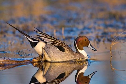 9 stunning photos of Colusa waterfowl | Local News - KCRA Home