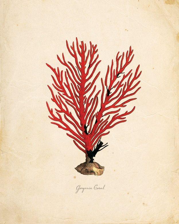 vintage coral prints | Vintage Sea Coral on Antique Ephemera Print 8x10 P127. $14.00, via ...