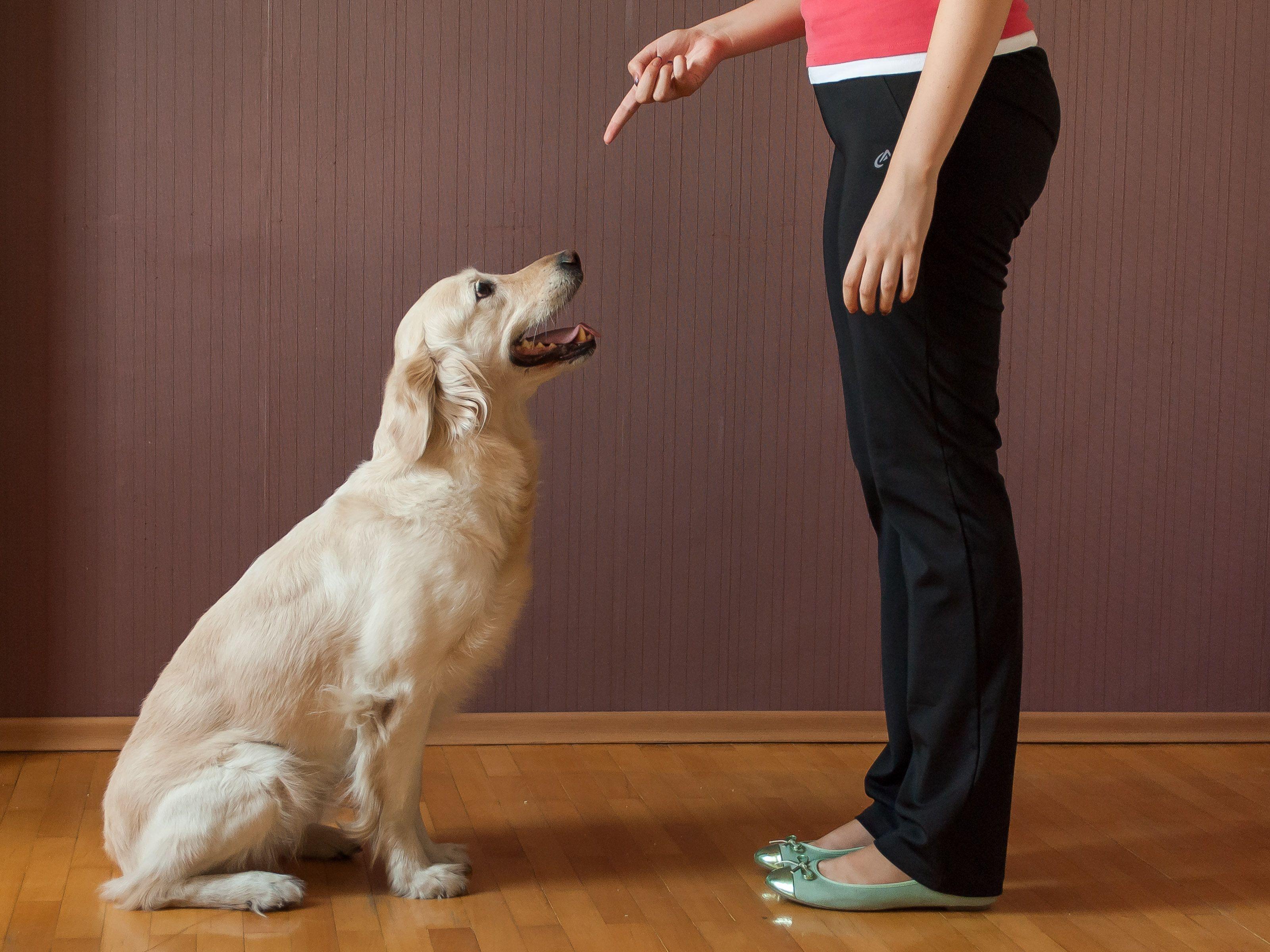 Teach Your Dog To Sit Dog Training Dog Training Books Dogs