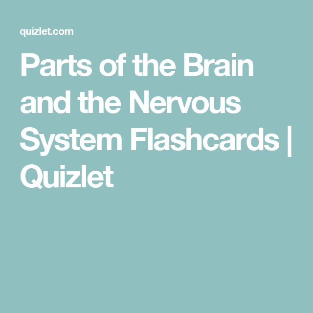 Parts of the brain and the nervous system flashcards quizlet parts of the brain and the nervous system flashcards quizlet ccuart Images