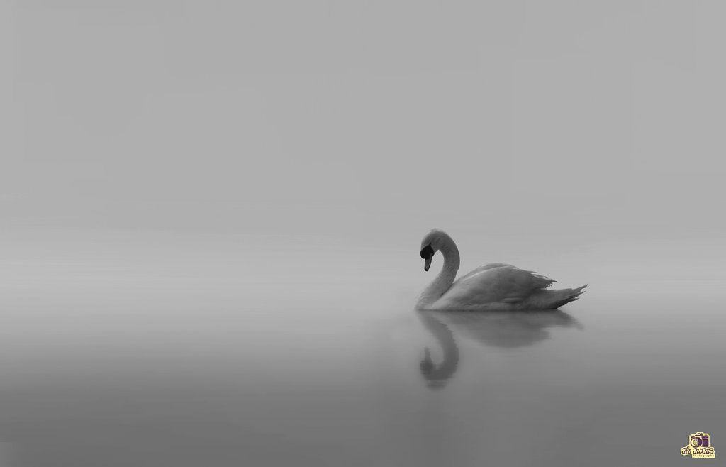 Serenity by aliawais.deviantart.com on @DeviantArt