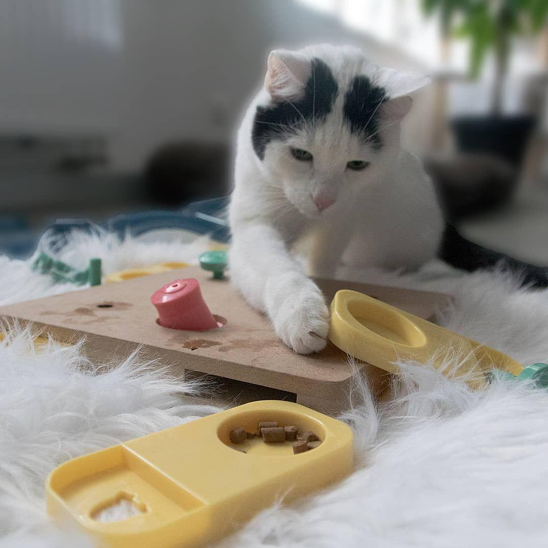 Anti Harnsteine Auf Naturlichem Weg Unsere Trockenfuttersorten Maxicat Sterne Menu Und Meatzie Schmaus Huhn Beugen Auf N Katzen Futter Futterruben Katzenliebe