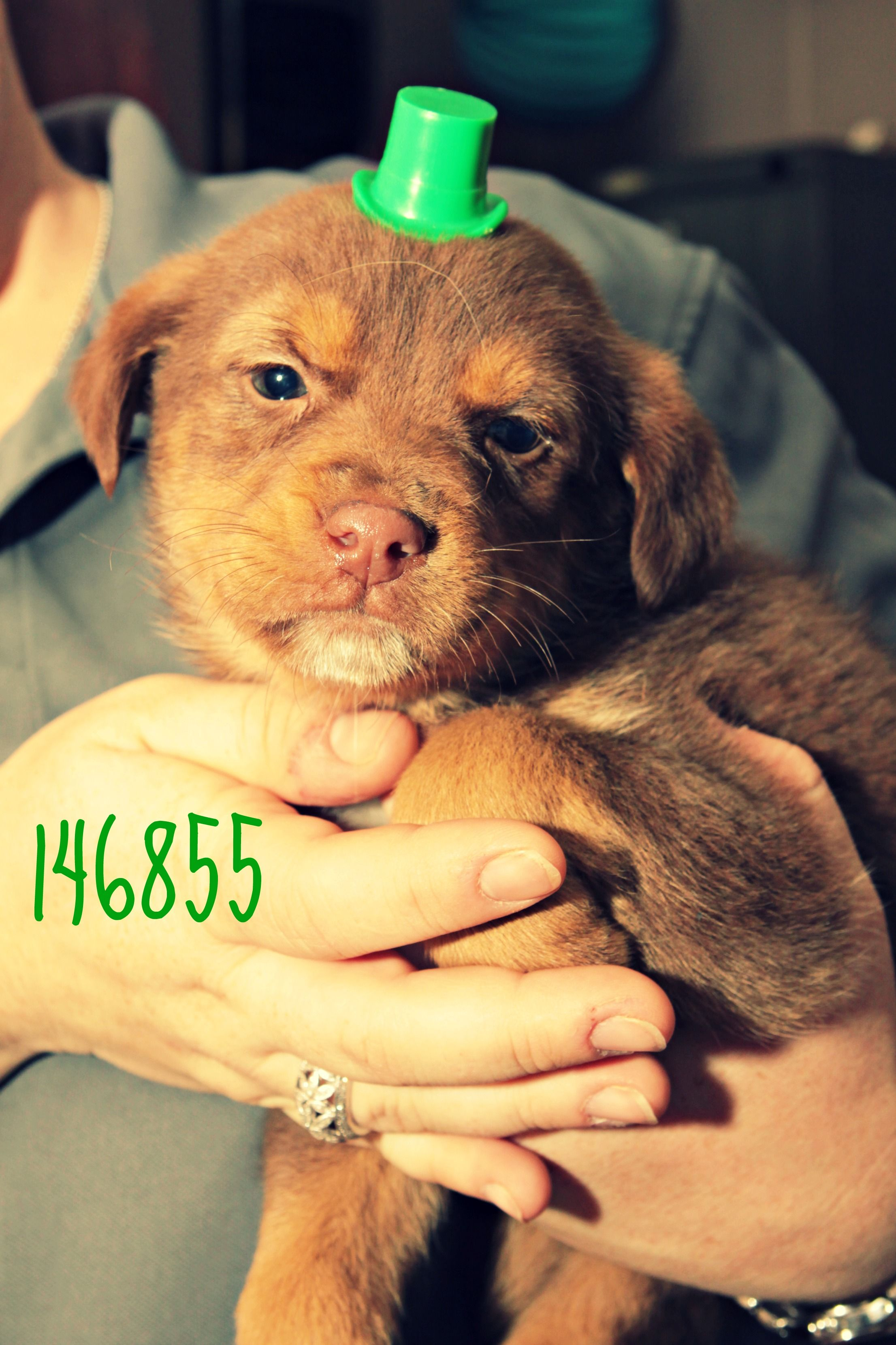 Teagan Adopt Me Today For More Information Please Visit Www Sandersvilleanimalshelter Com I Am Located In Sandersville Ga S Animal Shelter Animals Pets