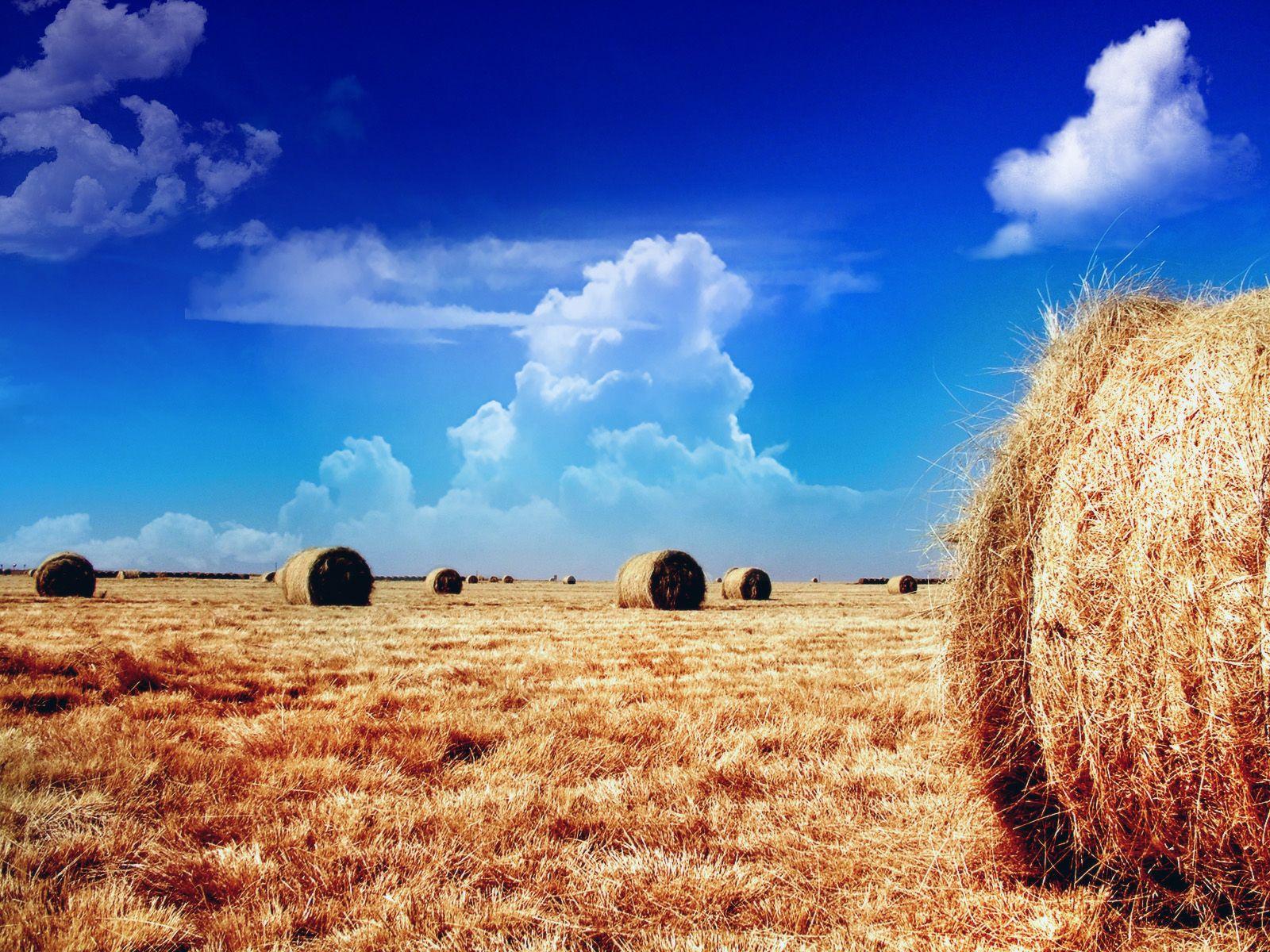 Return to farming