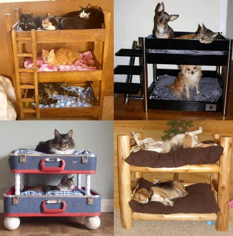 Cool cat and dog beds via I love creative designs and unusual ideas on Facebook
