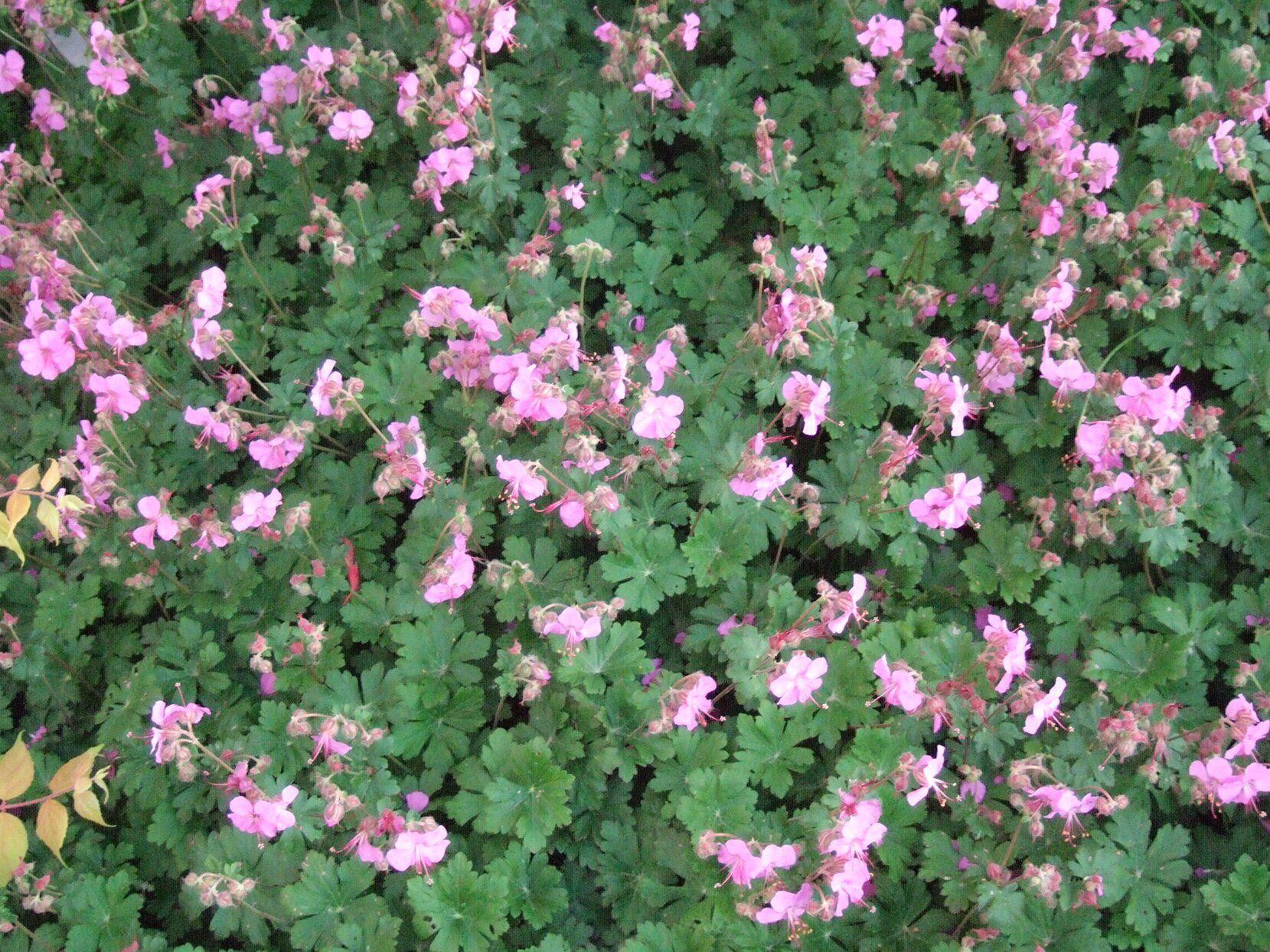 12 Tough Perennials That Grow in Dry Shade