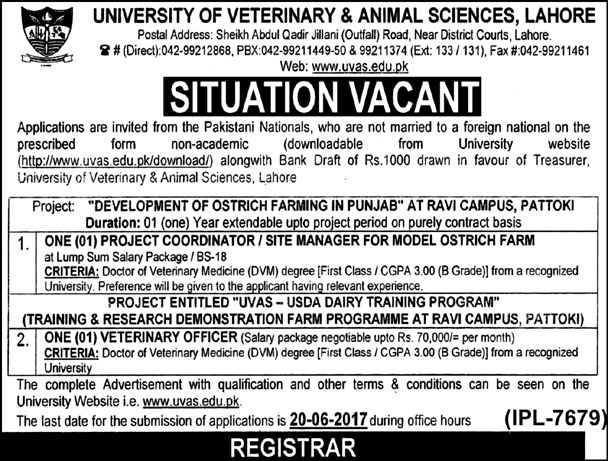 University of Veterinary and Animal Sciences (UVAS) Lahore, Latest - surveillance officer sample resume