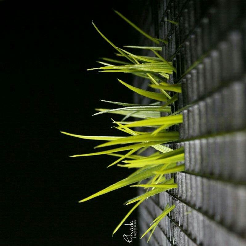 حتى أضعف المخلوقات تناضل من أجل الحرية من تصويري كانون Canon Plant Leaves Plants Leaves