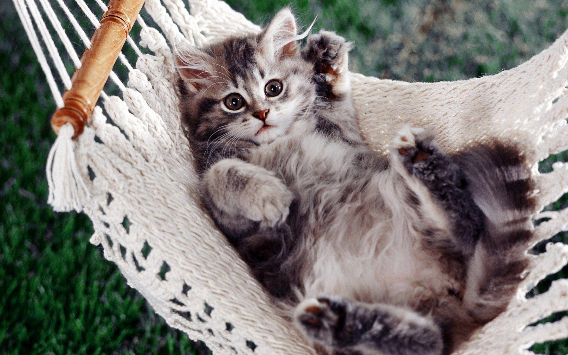 Cats Free Download Hq Cats Wallpaper Num 398 1920 X 1200 416 2 Kb Kittens Cutest Pretty Cats Cute Animals