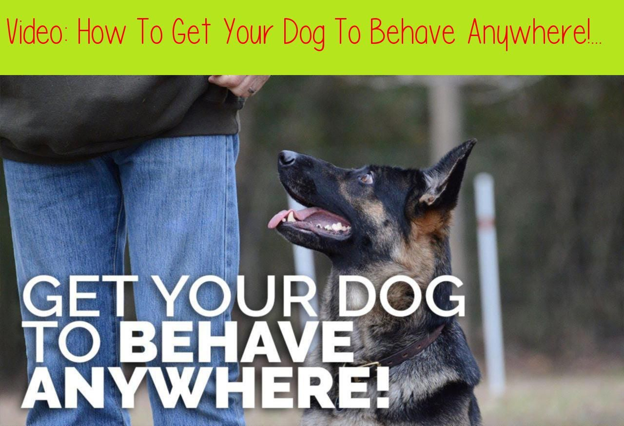 How To Get Your Dog To Behave Anywhere Training Environmentsyou