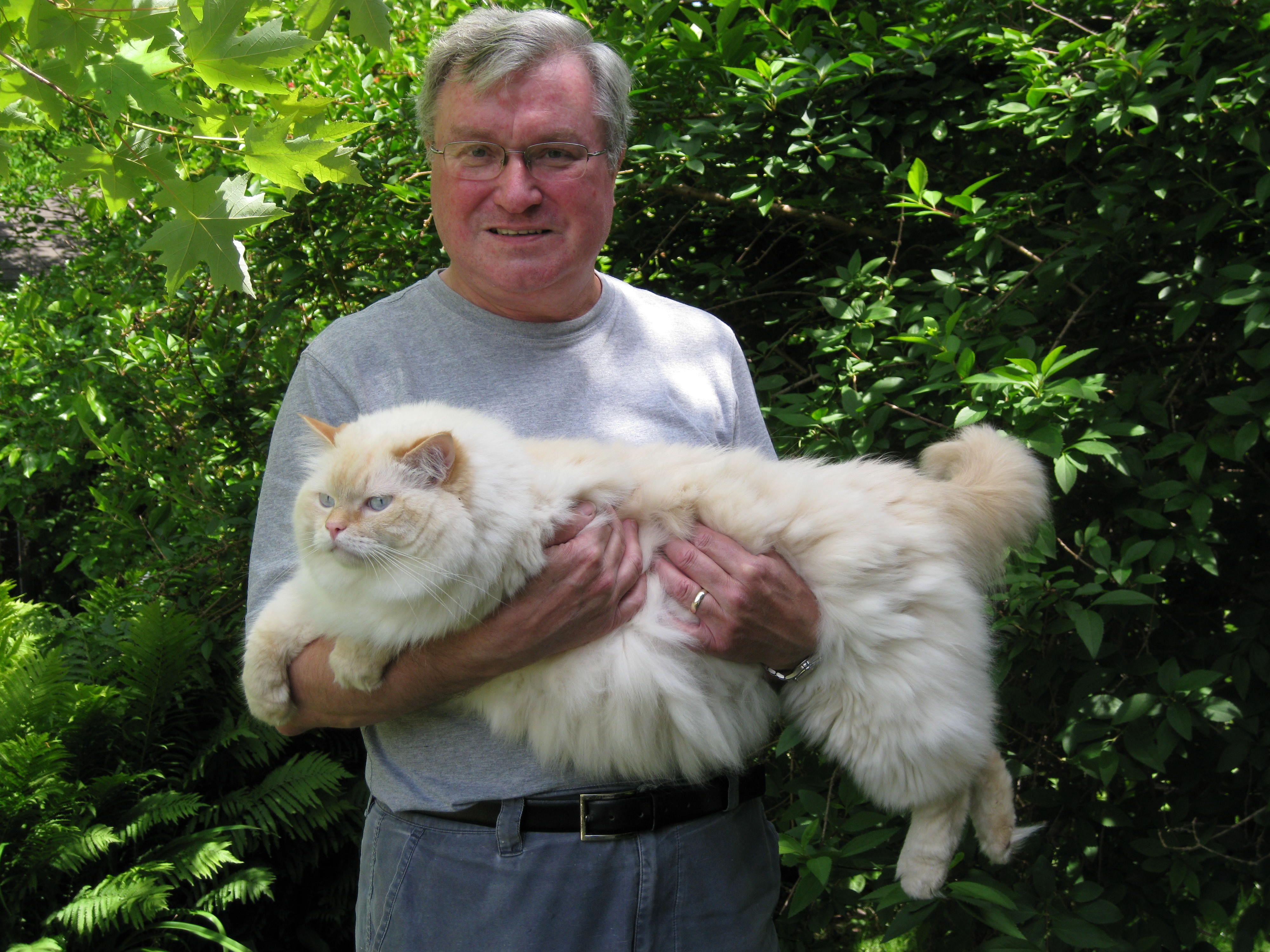 Ragdoll Cats Crazy cats, Cute animals, Ragdoll cat breed