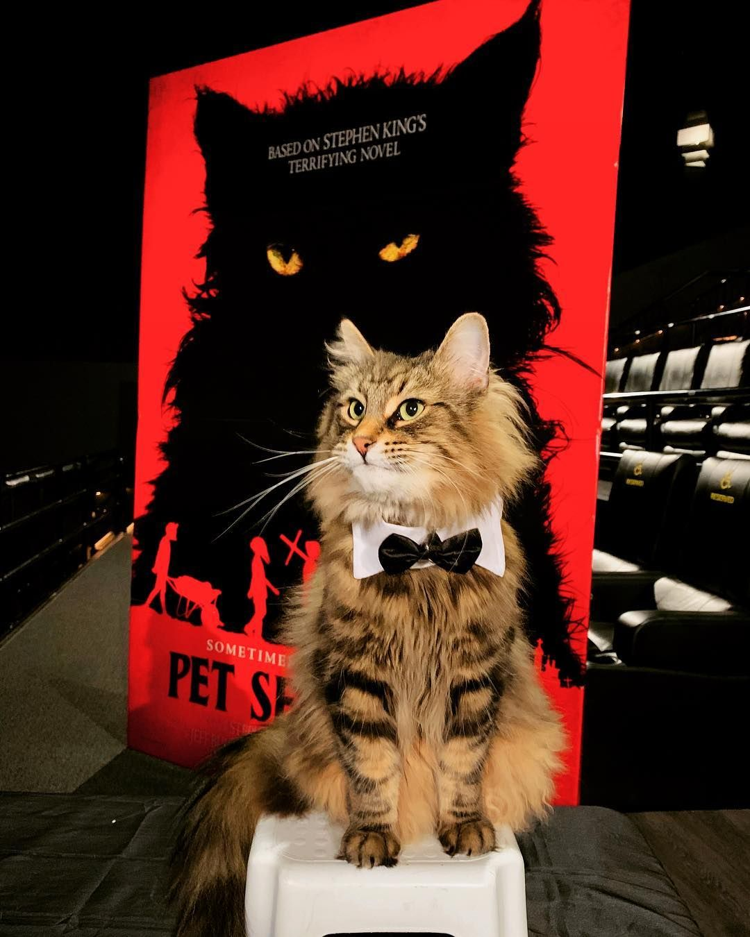 Leo, The Star Cat from 'Pet Sematary' Has Mysteriously