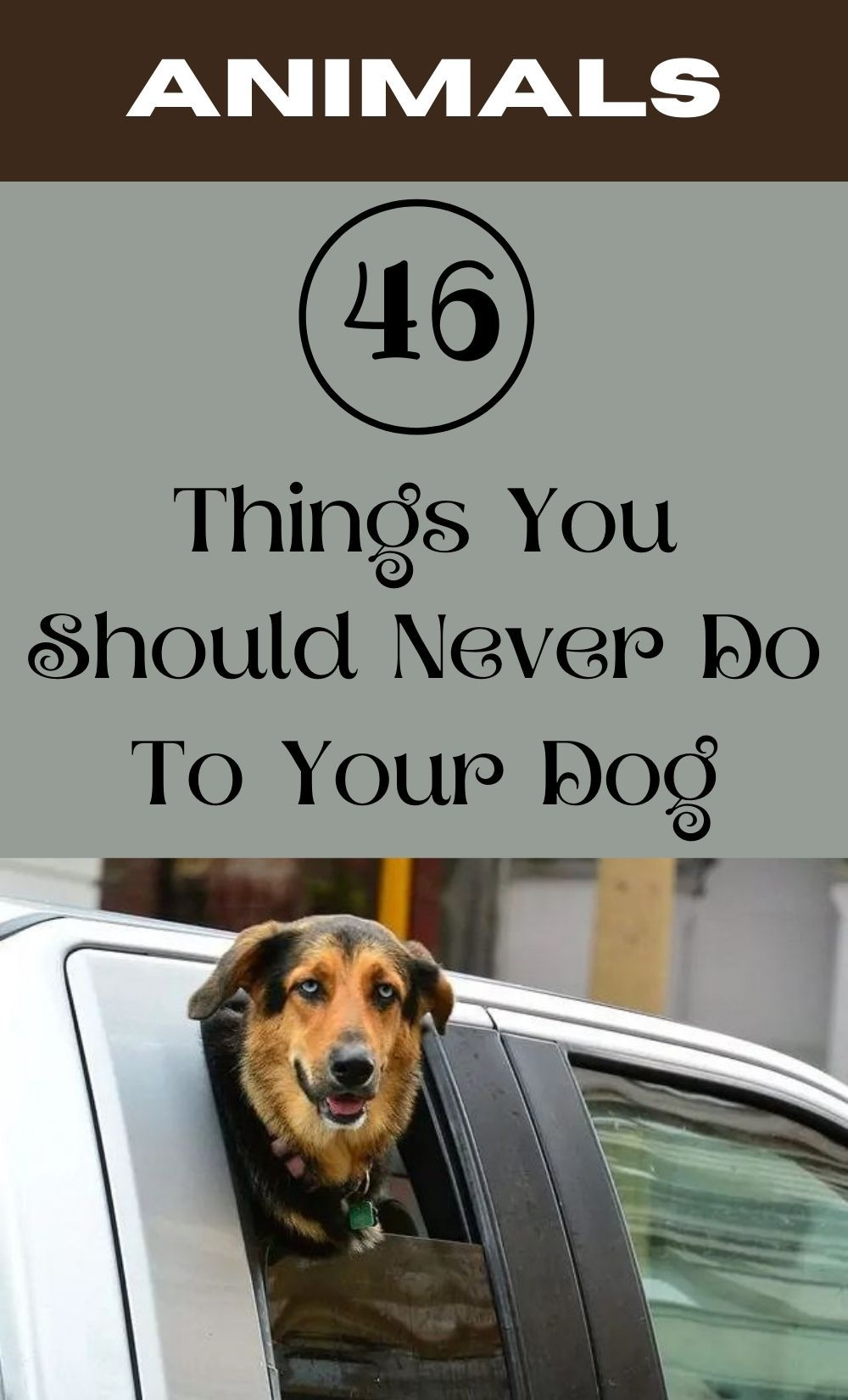 If You Own A Dog Here Are 46 Things You Should Never To Do Them Ever Pimple Solution Dogs Baby Swings