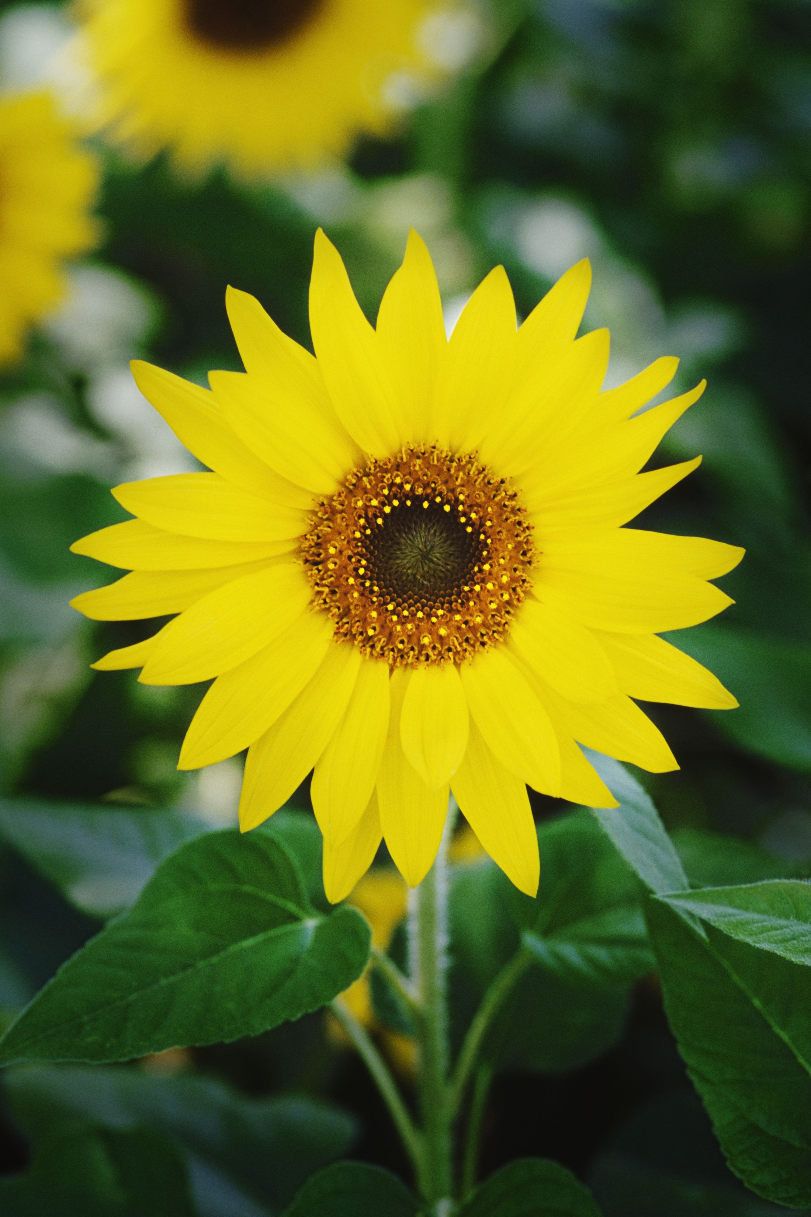 20 Flowers You Should Have In Your Fall Garden Fall Plants Autumn Garden Fall Flowers