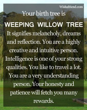 Your Birth Tree Weeping Willow Treei Ust Found This Out