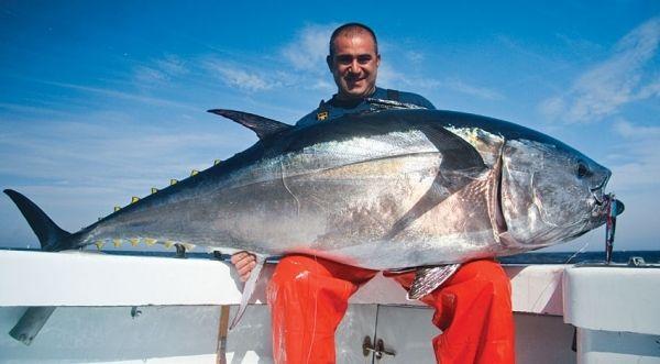 cape hatteras tuna