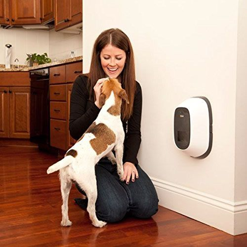Petchatz Let You Interact With Your Pets From Anywhere In The World Your Pet Pets Cool Things To Buy