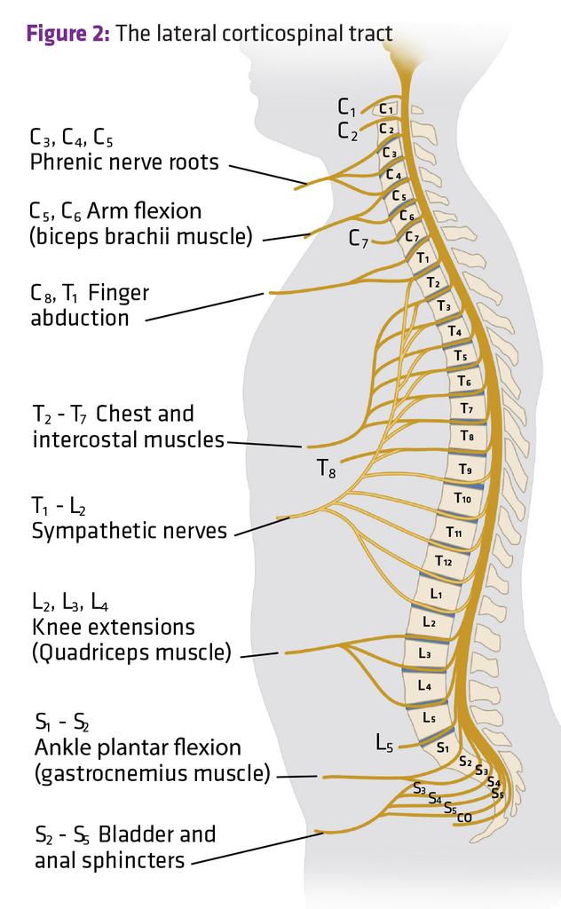 Pin de Katy Clark en Medical Learning and Laughs ...