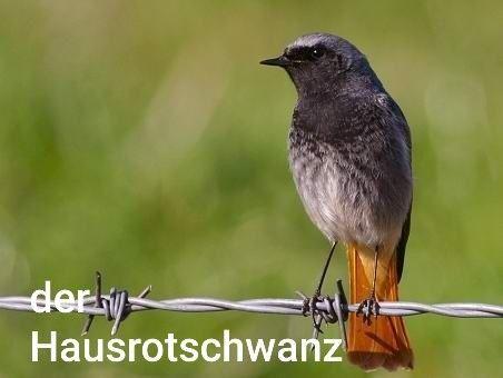 Pin von Christian Ketschler auf Stat Vögel Vögel als