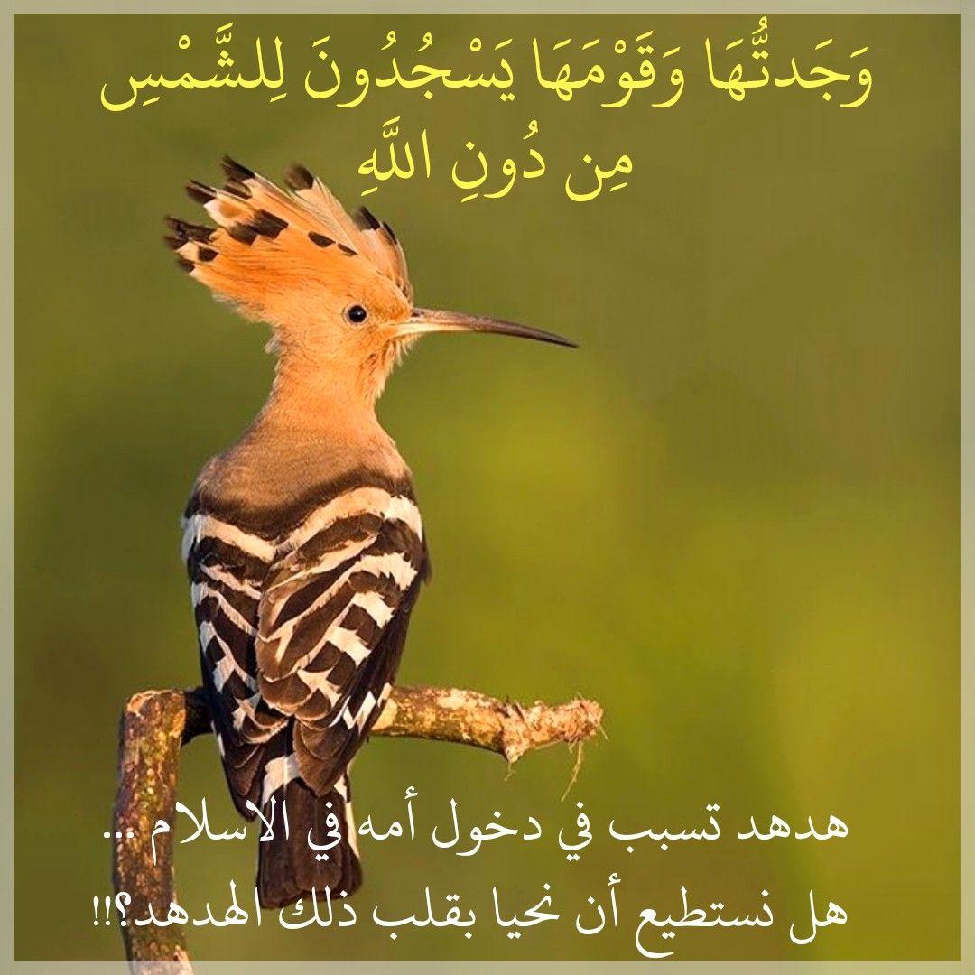 قرآن كريم آية وجدتها وقومها يسجدون للشمس من دون الله Animals Bird