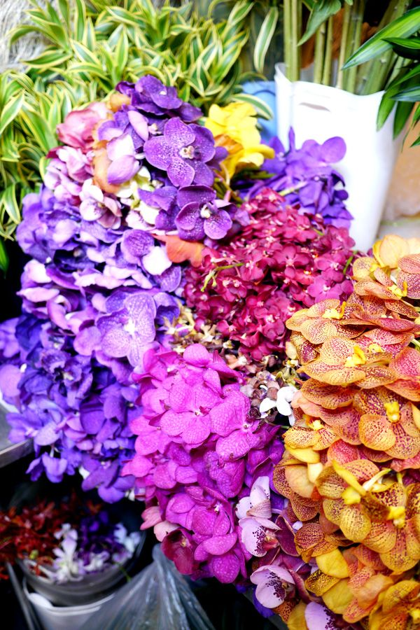 Vanda orchid, Bangkok\'s largest flower market, Pak Klong Talat ...