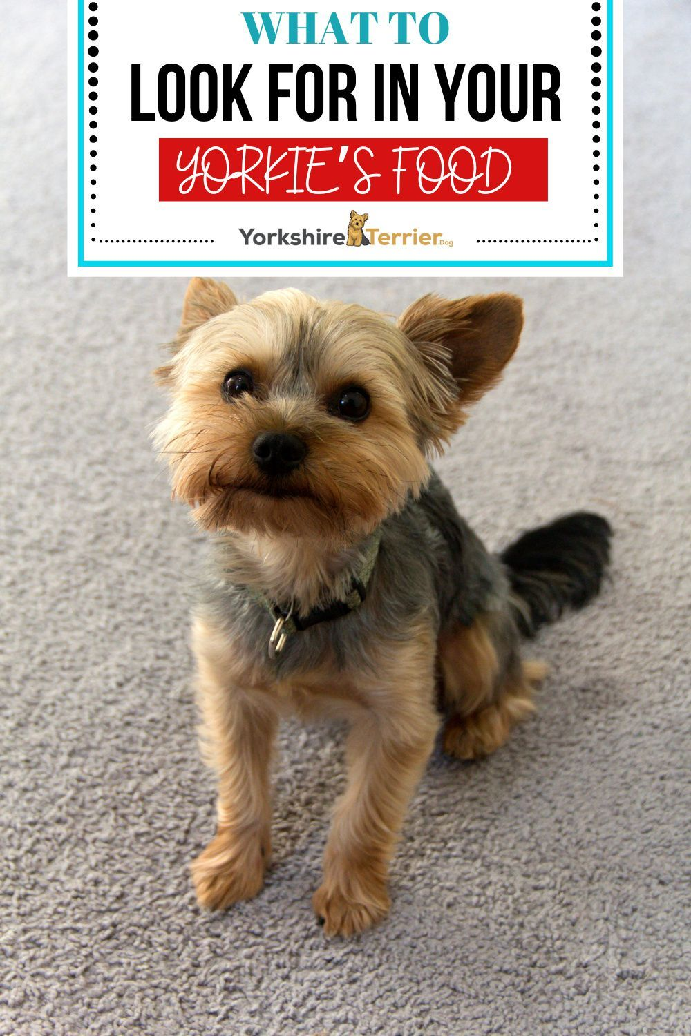 5 Best Soft Dog Food For Yorkies Across Life Stages In 2020 Yorkie Best Dog Food Puppy Pads Training