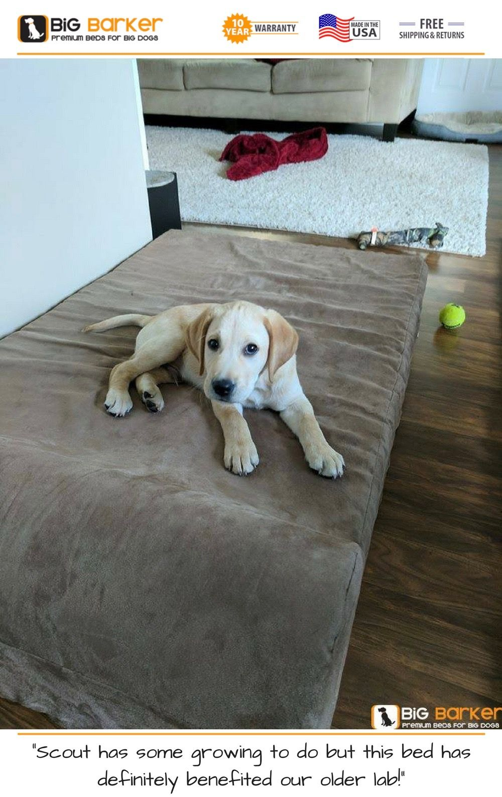 Orthopedic Dog Beds for Large & Extra Large Dogs Big