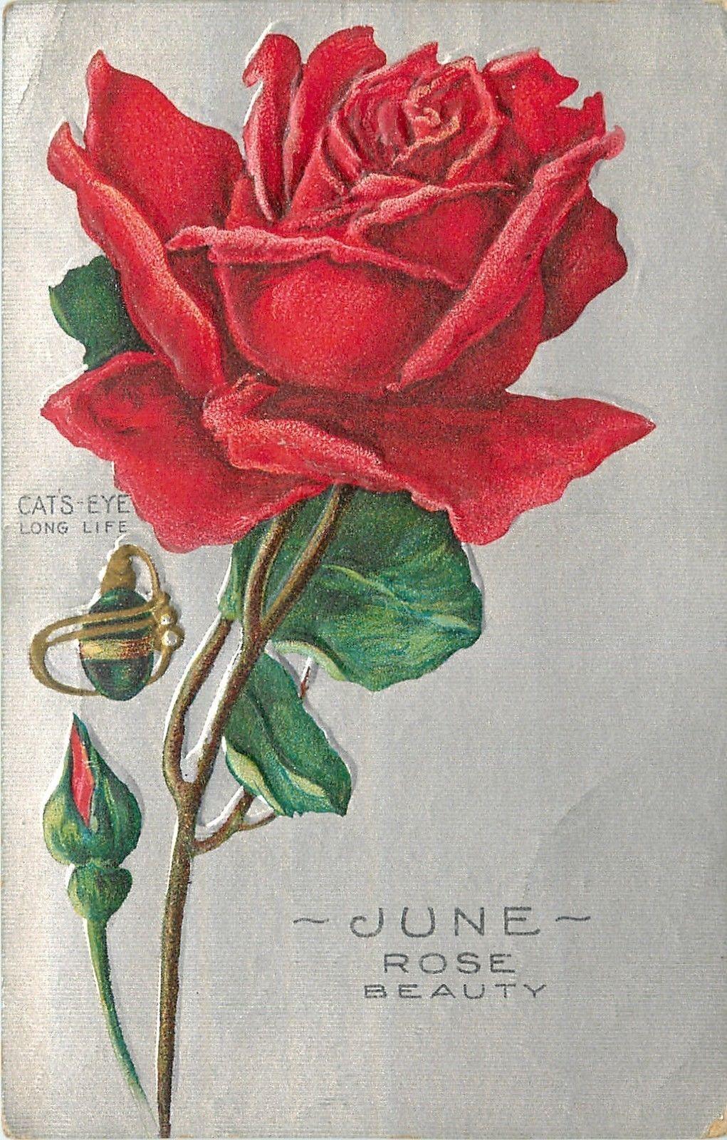 June birthday flowerred rosecats eye pendantsilver textured back collectible greeting postcards ebay izmirmasajfo