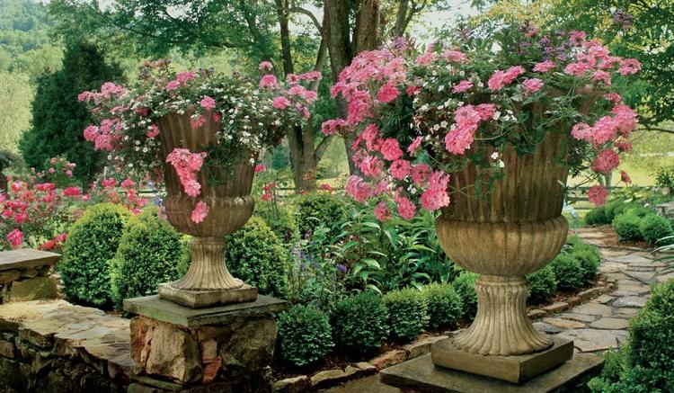 große Pflanzkübel Barock Stil Stein rosa Verbenen weiße Fettblätter ...