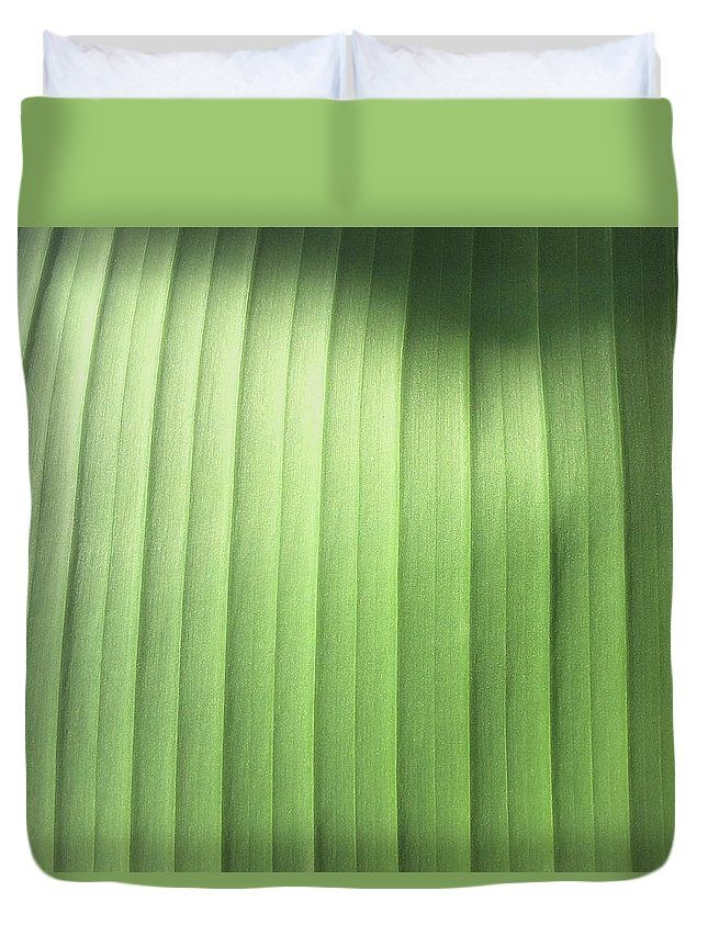 This abstract print is an original photograph of a banana leaf. It was shot at close range, so to speak, focusing on the ribbing of the leaf as it grows out from the center spine. The curving bands of light green shift in color from yellow green in the shadows to a more blueish green in the sunlight.