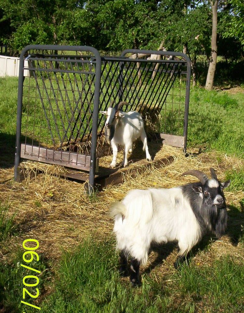 Hay Feeder Ideas More Absent Jack Acres Farm Friendly